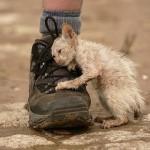 Можно ли молиться о помощи Господа животным, страдающим от руки человека?