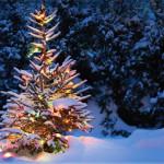 «Рождественское дерево» или просто ёлка