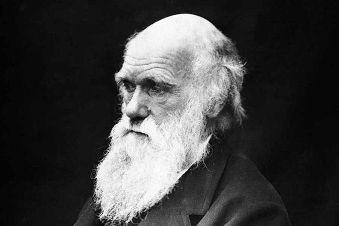 Совместимы ли теория Дарвина и Библия?