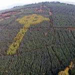 Ирландский лесник высадил деревья в форме кельтского креста