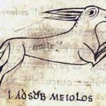 Библейский зоопарк:вся правда о зайцах