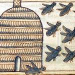 Библейский зоопарк: пчелы и мед