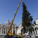 Ёлка из Польши украсит площадь св. Петра в этом году