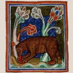 Библейский зоопарк: медведь