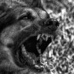 Папа Франциск: «Дьявол, как пёс на цепи»